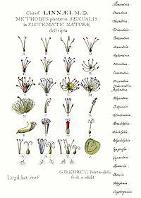 botanische namen gartenwiki. Black Bedroom Furniture Sets. Home Design Ideas